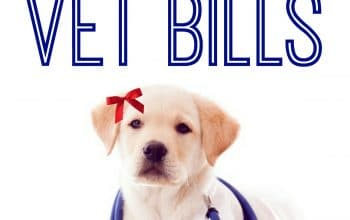 12 Ways to Save on Vet Bills