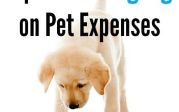 6 Tips for Saving Big on Pet Expenses
