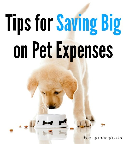 tips for saving big on pet expenses