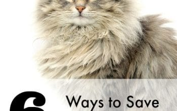 6 Ways to Save on Cat Expenses