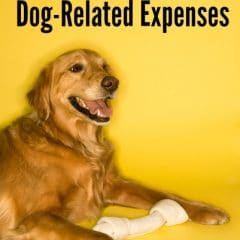 ways to save on dog related expenses