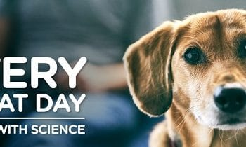 Enter to Win a Year's Supply of Pet Food + More (ends 1/7)