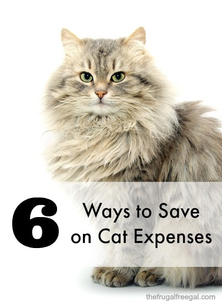 ways to save on cat expenses
