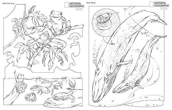 FREE Printable Coloring Book from National Geographic!