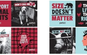 FREE PETA 'Like You, Only Different' Stickers