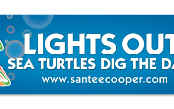 FREE 'Lights Out Sea Turtles Dig the Dark' Bumper Sticker